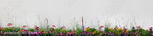 Fototapeta Large Detailed Colorful Horizontal Panoramic Blooming Flower Bed Closeup Magenta Purple, Red Pink, Orange, Yellow Annual Flowers Flowerbed Panorama, Flowering Garden Plot Banner, Beige Wall Background obraz