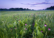 A Hiking Path Through A Prairie Of Native Grasses And Wildflowers At Dusk.