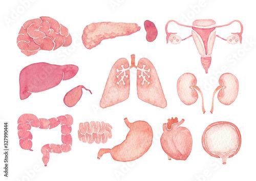 Fotografie, Obraz 人体 臓器 内臓 水彩 イラスト アイコンセット