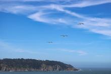 Birds Flying At Golden Gate Bridge