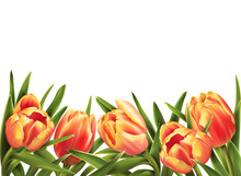 Colorful Tulips Bouquet Isolat...