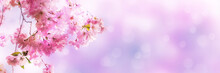 Kirschblüten Vor Abstraktem H.