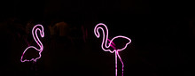 Flamingos Neon Sign Of Differe...