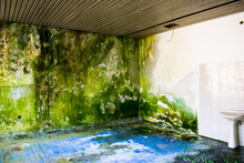 Moss Grows On An Interior Wall. Humid. Some Poison Ivy Toilet Sink White And Blue Tiles. Nature Takes Over Abandoned Buildings, Houses.