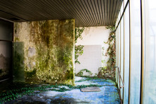 Poison Ivy Growing On A Mossy Wall. Big Windows. Blue Tiles. Interior Room. This Was Once A Doctor's Office. Nature Takes Over Abandoned Buildings, Houses.