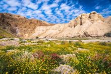 Qumran Caves With Flowers, Judean Desert Israel