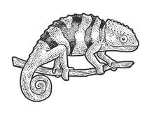 Chameleon Lizard Sketch Engrav...