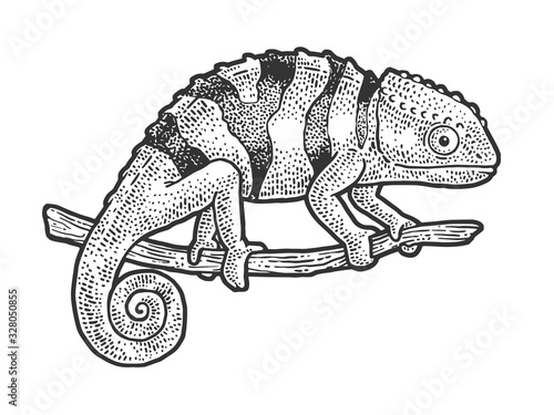 Chameleon lizard sketch engraving vector illustration Tableau sur Toile