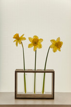 Yellow Daffodils In A Glass Vase