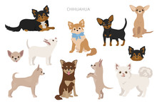 Chihuahua Dogs In Poses. Diffe...