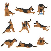 German Shepherd Dogs In Differ...