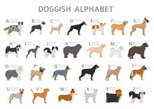 Doggish Alphabet For Dog Lovers. Letters Of The Alphabet With The Names Of The Dog Breeds