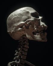 White Full Human Skull On Black Background