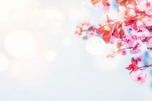 Spring Blossom Background.