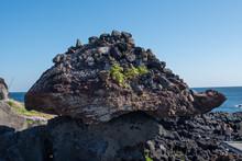 Turtle Rock Formation Seopjikoji Coast Jeju