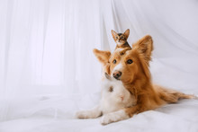 Mixed Breed Dog Posing With A ...