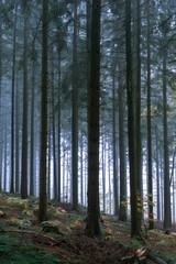 Glühen im Wald