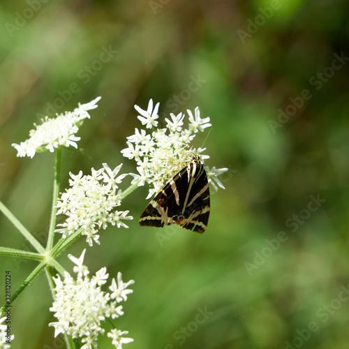 Papillon nommé - écaille chinée - Canvas Print
