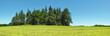 Waldstück im Sommer