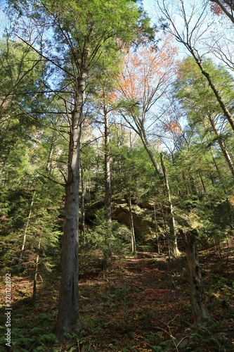 Mountain side in a wooded forest
