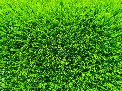 Beautiful green grass background texture and environment concept, green field garden - 328123017