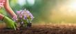 Leinwanddruck Bild - Planting Flowers in a Garden Closeup
