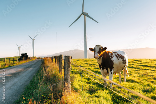 Obraz Cow and Wind generators in the background. Nature ecology concept. - fototapety do salonu