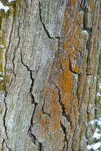 Rough Textured Bark Of An Old ...