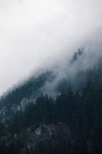 Foggy Trees On A Mountainside