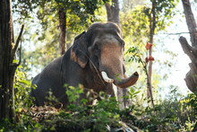 Meets With Elephant In Deep Forest In Thailand