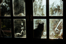 Black Cat Looks Through Dirty Window