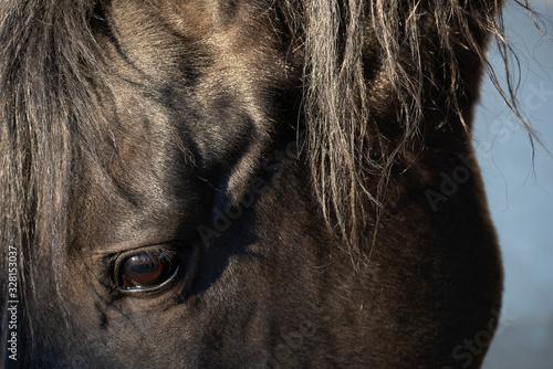 Fototapeta Cabeza y ojo de caballo  obraz