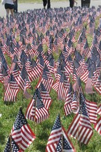 American Flags Set Out In Preparation Of Memorial Day