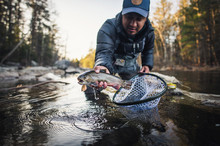 A Man Catches A Trout During A...