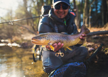 A Man Catches A Large Brown Trout On A River In Maine