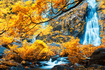 Fototapeta Wodospad Gorgeous waterfall in a colorful forest.