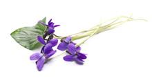 Violets Flowers, Viola Odorata...