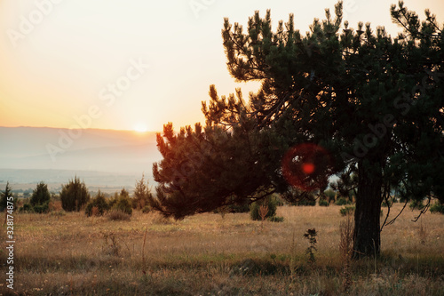Vászonkép Blurred branchy pine tree in mountain meadow and rays of sunrise breaking through branches
