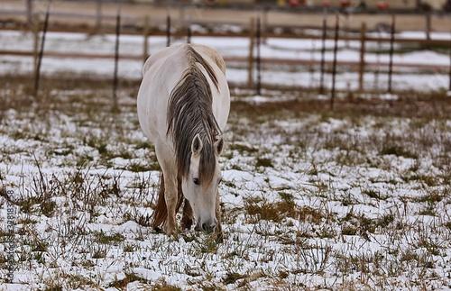 Photo Beautiful horse on pasture