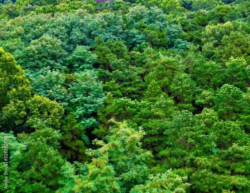 한국의 녹색 숲 풍경
