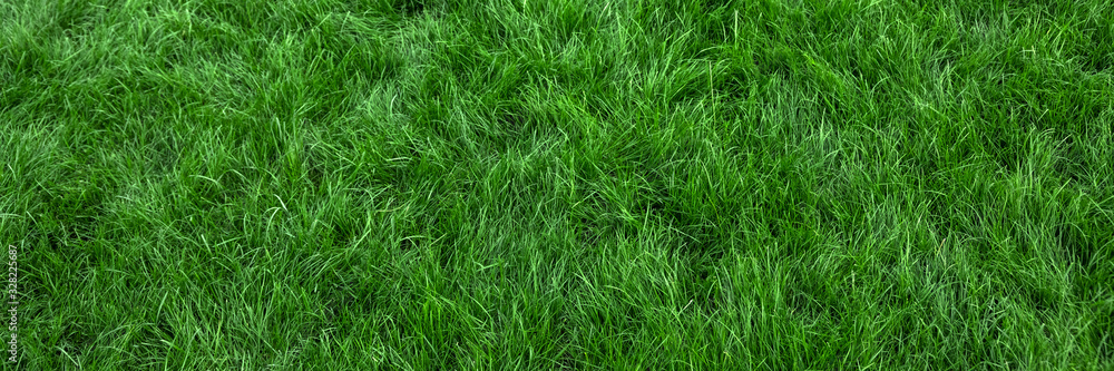 Fototapeta Natural green grass background, fresh lawn top view