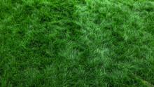 Natural Green Grass Background...
