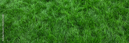 Fototapeta Natural green grass background, fresh lawn top view obraz