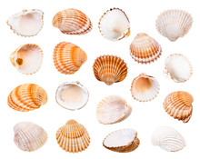 Set Of Various Shells Of Cockl...