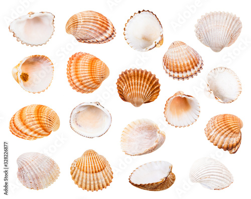 Fotografiet set of various shells of cockles isolated