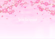 Cherry blossoms background illustration ( spring season theme )