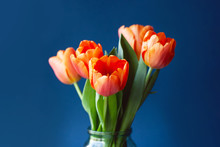 Bouquet Of Tulips In Orange Colors On Trendy Blue Background. Concept Of Spring, Women's Day, Mother's Day, 8 March, The Holiday Greetings.