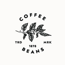 Coffee Beans Logo Template For Your Creative Projects And Cafe Branding. Isolated Graphic Design Template, Vintage Minimalist Style With Coffee Plant Illustration
