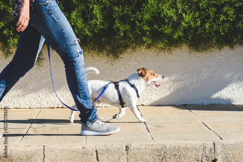 Dog walker walking fast with her pet on leash at street pavement Canvas-taulu