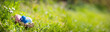 Leinwanddruck Bild - Nest with easter eggs in grass on a sunny spring day - Easter decoration, banner, panorama, background